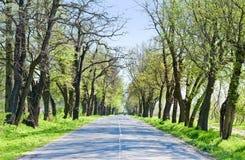 Landsväg med för träd början along - av våren Arkivfoto