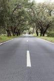 Landsväg med gamla korkekar Arkivfoto