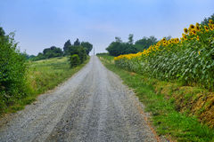 Landsväg nära Vigolo Marchese Piacenza, Italien Royaltyfri Fotografi