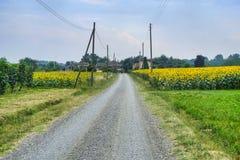 Landsväg nära Vigolo Marchese Piacenza, Italien Arkivfoton