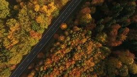Landsväg och höstlig skog lager videofilmer