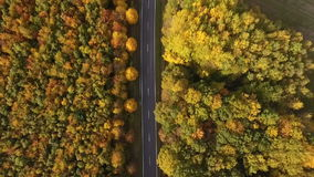 Landsväg och höstlig skog stock video