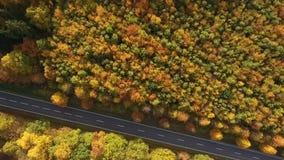 Landsväg och höstlig skog arkivfilmer