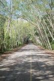 Landsväg på Kaeng Krachan Royaltyfria Foton