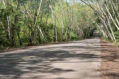 Landsväg på Kaeng Krachan Royaltyfri Fotografi