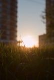 Landsväg på solnedgången Arkivfoton