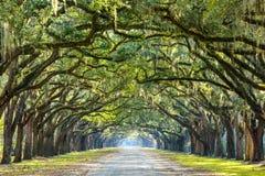 Landsväg som fodras med ekar