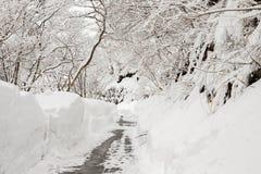 Landsväg som leder bland frostade träd i shirakawagoen, Takayam Arkivbilder