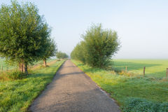 Landsväg tidigt på en dimmig morgon Royaltyfria Bilder