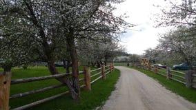 Landsväg till och med Apple blomningar arkivbild