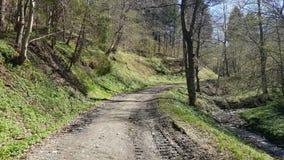Landsväg till och med skogen Arkivfoto