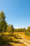 Landsväg till skogen i solig dag för sommar royaltyfria foton