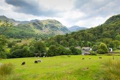 Landszenenschafe im Feld Seatoller Borrowdale Valley See-Bezirk Cumbria England Großbritannien Lizenzfreies Stockbild