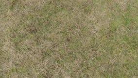 Landung auf einer Rasenfläche stock footage