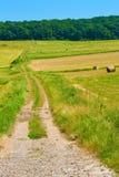 Landweg aan het hout Stock Foto's