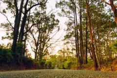 Landweg in Australië Stock Afbeelding
