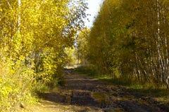 Landweg bij de rand van het bos royalty-vrije stock foto