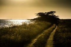 Landweg bij zonsondergang royalty-vrije stock afbeelding