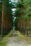 Landweg in bos Royalty-vrije Stock Afbeelding