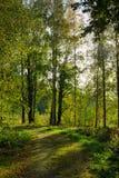 Landweg in bos Royalty-vrije Stock Foto's