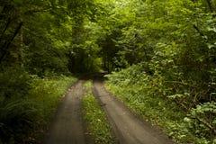 Landweg in bos Stock Afbeelding