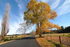 Landweg in de Herfst Stock Foto's