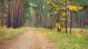 Landweg in de mooie slingering van de herfst bosbladeren nauwelijks in de wind stock video