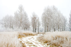 Landweg in de winterhout Royalty-vrije Stock Afbeelding