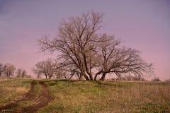 Landweg in de woestijn en de nabijgelegen bomen Royalty-vrije Stock Fotografie