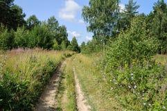 Landweg in de zomerbos Royalty-vrije Stock Foto's