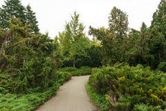 Landweg die boomsteeg doornemen in een mooie de zomerdag Stock Foto's