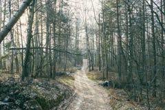 Landweg die het bos kruisen Royalty-vrije Stock Foto's