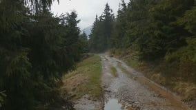 Landweg die onder groene sparren in Karpatisch in de herfst draaien stock video