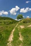 Landweg die tot een boom leiden Stock Foto