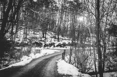 Landweg door de sneeuw Stock Foto