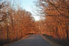 Landweg door het hout Royalty-vrije Stock Foto's