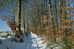 Landweg durch Holz im Winter Lizenzfreie Stockfotografie