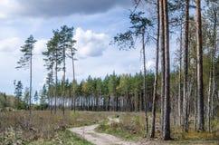 Landweg een hout Stock Afbeelding