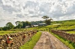 Landweg eingefaßt durch Steinwände und Felder. Stockbilder