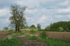 Landweg en de oude acaciabomen Royalty-vrije Stock Foto