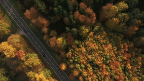 Landweg en herfstbos stock video