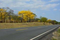 Landweg gele bomen en blauwe hemel Stock Afbeeldingen