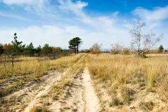 Landweg in het bos Stock Afbeeldingen