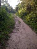 Landweg in het bos Royalty-vrije Stock Foto's