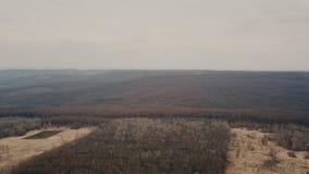 Landweg in het bos stock videobeelden
