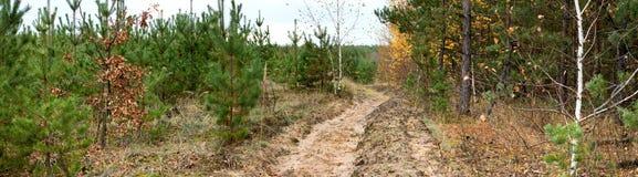 Landweg in het de herfstbos Stock Afbeelding
