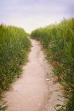 Landweg in het de lentelandschap van het tarwegebied - Verticale close-up Stock Afbeeldingen