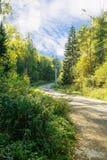 Landweg in het hout Royalty-vrije Stock Foto's