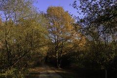 Landweg in het midden van een bos met de herfstkleuren die de zon met zijn oranje licht verlicht royalty-vrije stock foto