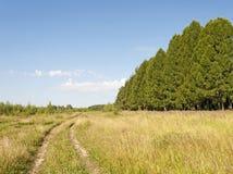 Landweg langs het bos Royalty-vrije Stock Afbeeldingen